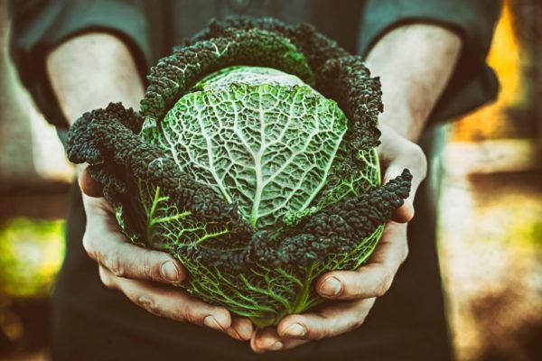 Verduras depuratorias desintoxicantes cuales son beneficos propiedades recetas repollo