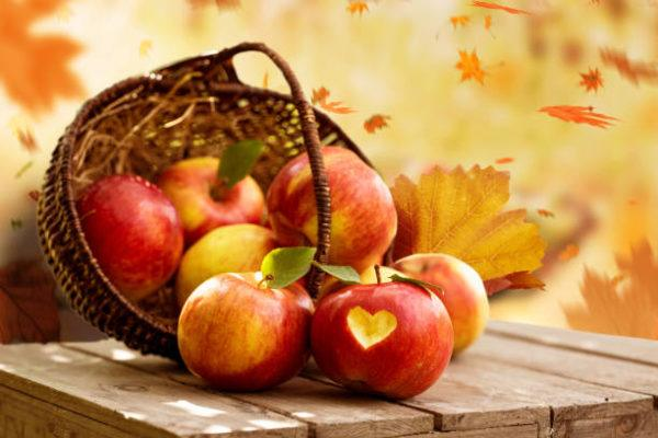 Dietas para adelgazar la dieta del otono cinco
